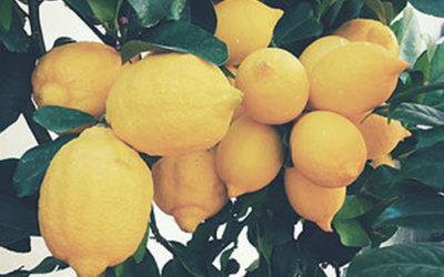 Morning Lemon Water Cleanse